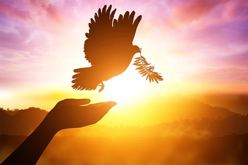 Por do sol com a silhueta de um pombo simbolizando o Espírito Santo